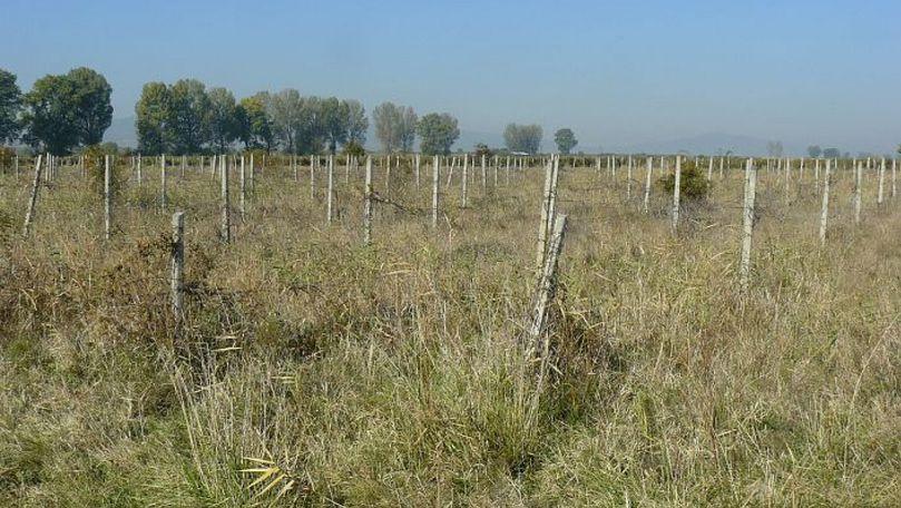 Un sfert din podgoriile Moldovei sunt abandonate: Explicații oficiale