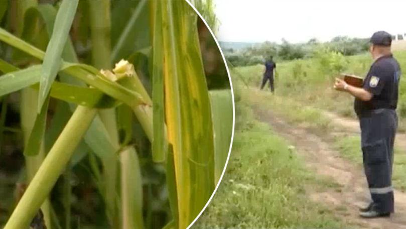 Ploile recente au făcut ravagii: Mărturia fermierilor și zone afectate