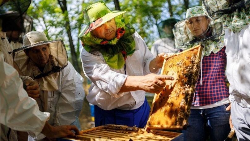 Femeia de apicultura care cauta omul)