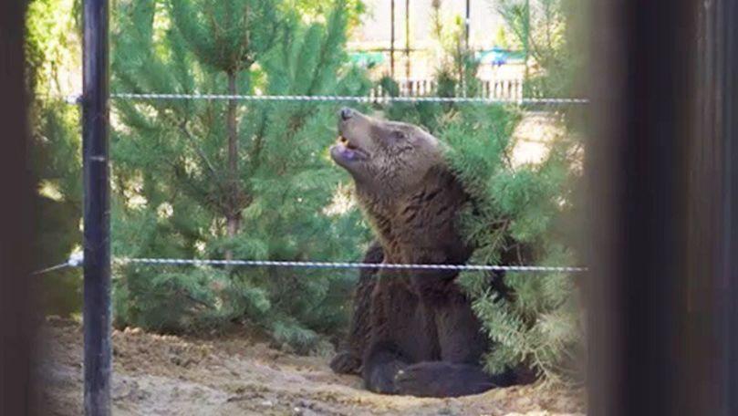 Cum arată noua casă a urșilor de la Grădina Zoologică din Chișinău