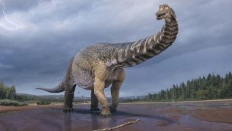 Cel mai mare dinozaur descoperit în Australia aparţine unei noi specii