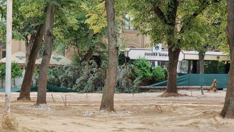 Mașină distrusă de un brad în scuarul Mihai Eminescu din centrul Chișinăului
