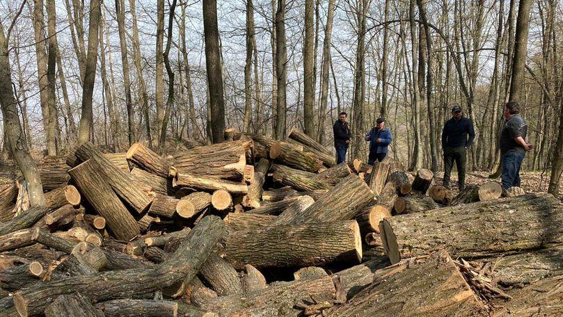 Hoții de păduri: O nouă reacție cu iz de poezie a Agenției Moldsilva
