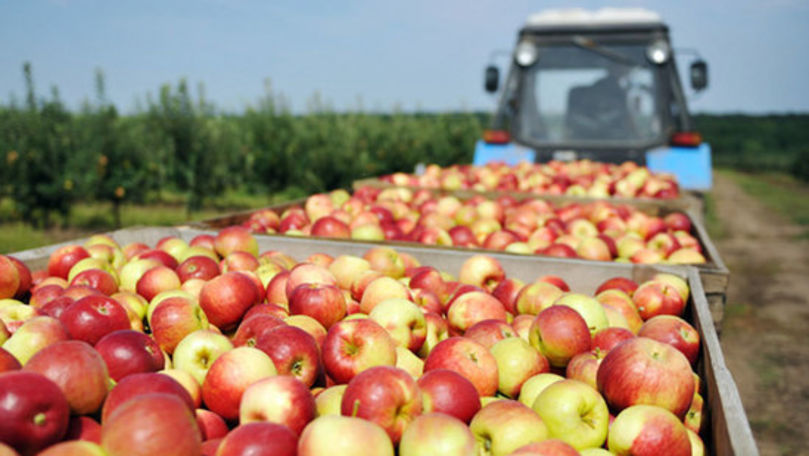 Exporturile Republicii Moldova în Federația Rusă au crescut