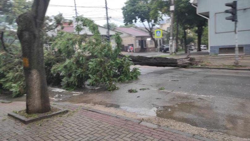 Un copac, doborât de ploaie, a căzut peste firele electrice în Capitală