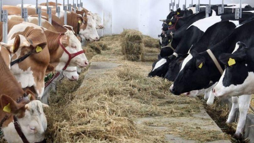 Biroul Național de Statistică: Sectorul zootehnic din Moldova este în scădere