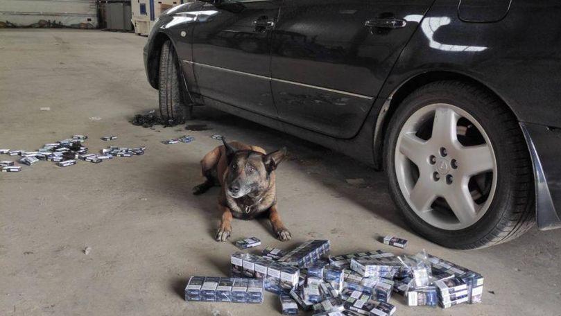 Descoperirea făcută de câinele vameșilor Nero într-un Lexus suspect