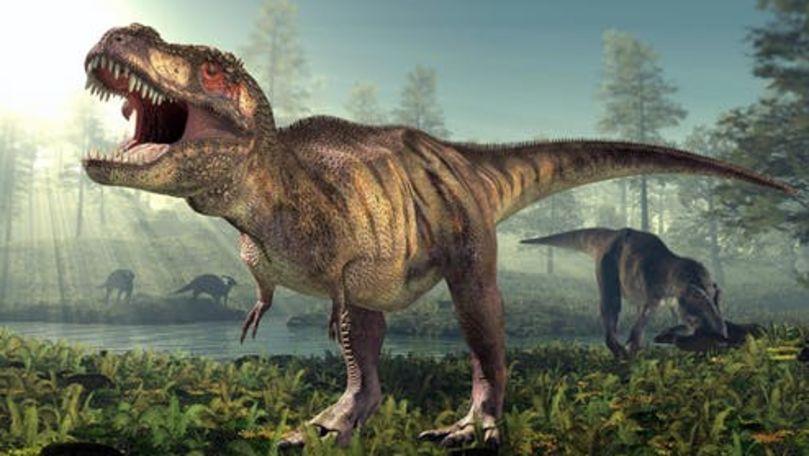 Dinozaurul T-Rex nu era atât de agil pe cât a fost reprezentat în filme
