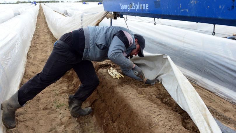 Un fermier riscă închisoarea, pentru că își plătea muncitorii cu 4 euro