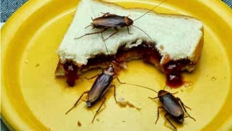 Părinte: Copiii vin cu pișcături de gândaci de la grădiniță