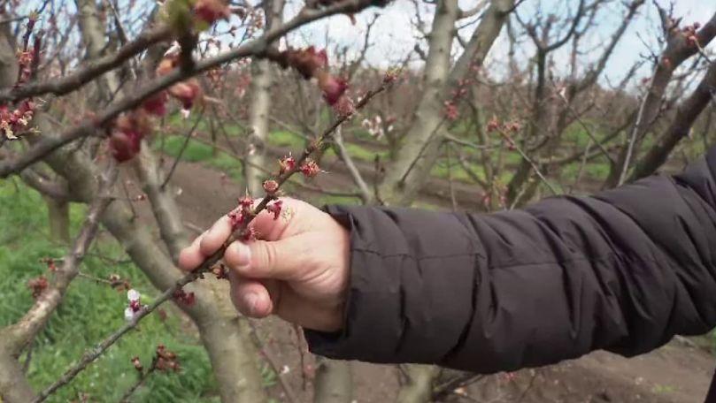 Prognoze: Fructe puține și scumpe, din cauza primăverii capricioase