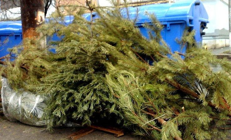 В Молдове принялись перерабатывать новогодние ёлки в удобрения