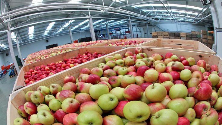 В Григориополе построен самый большой в Молдове холодильник для яблок