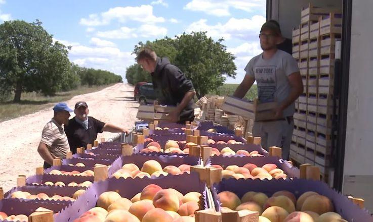 Студенты из Белоруссии приступили к уборке урожая в молдавском колхозе