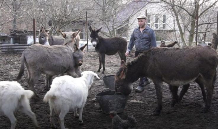 Фермер из Фалешт производит ослиное молоко по 400 лей за литр