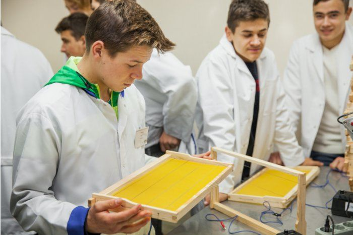 Начался прием документов на пчеловодство и производство ягод