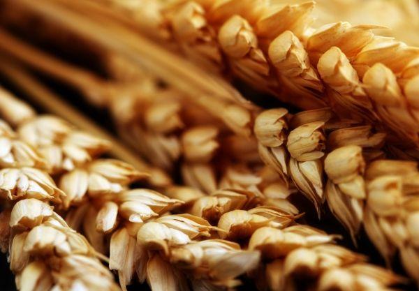 Молдова – последняя страна в СНГ и Европе, где ещё не подорожал хлеб