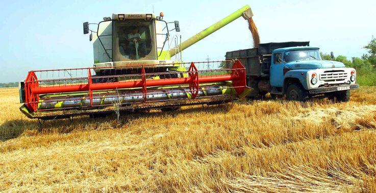 Сокращение урожая пшеницы не станет угрозой для продбезопасности