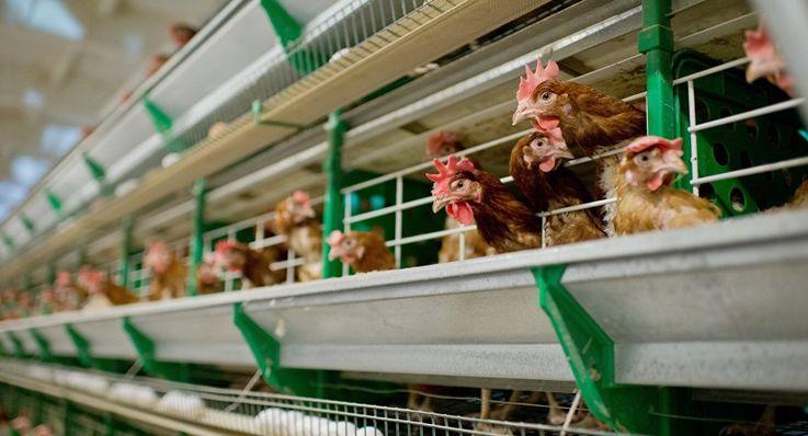 РМ предпринимает меры для получения права экспорта в ЕС мяса птицы и яиц