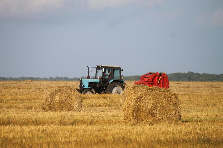 В 2020 году в Молдове урожай зерновых сократится в два раза