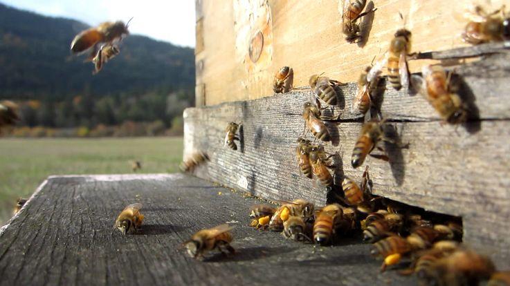 Молодые люди проходят практическое обучение в области пчеловодства