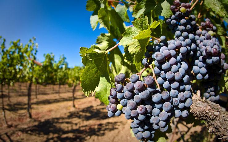 Технический университет Молдовы выпустил 16 специалистов виноделия