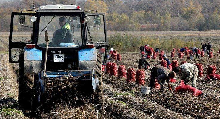 Правительство рассматривает возможность предоставления помощи фермерам