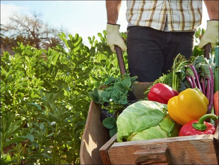 Усугубляется дефицит рабочих в сельском хозяйстве