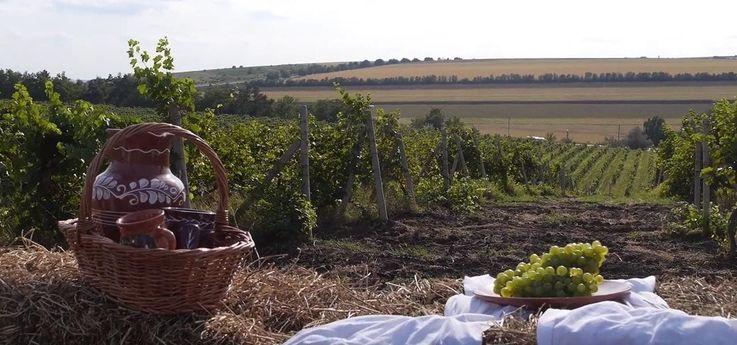 Молдова предлагает одно из лучших винных туристических направлений мира