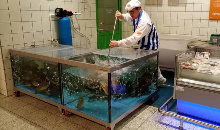 Налоговая служба Молдовы проверит деятельность торговцев живой рыбой