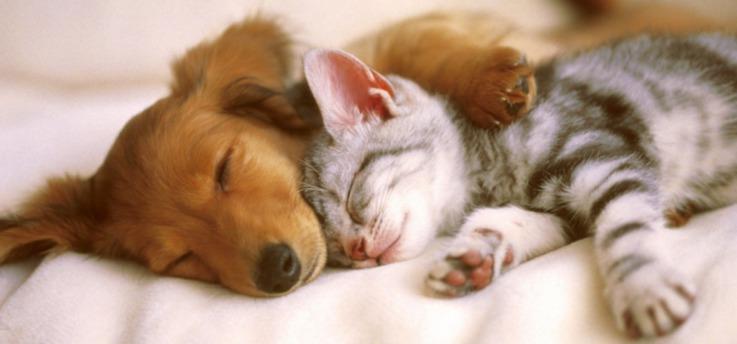В ветеринарную клинику Дублина ищут «обнимателя котов»