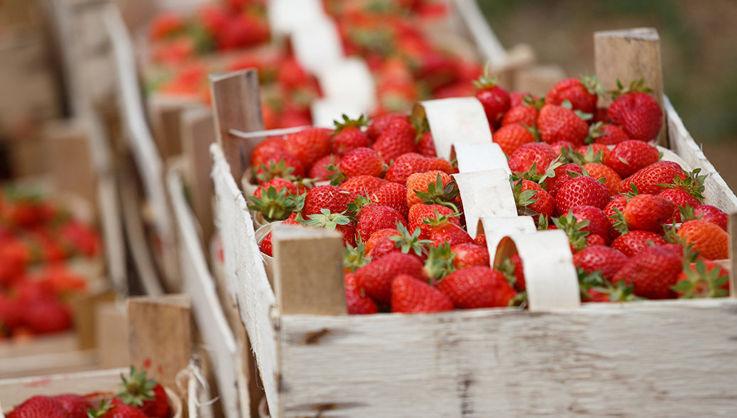 Существенное снижение цены на клубнику прогнозируется в середине мая