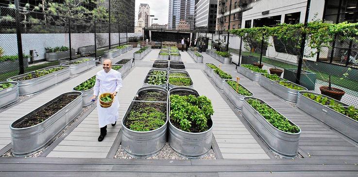 Городские фермы могут приносить до $160 млрд ежегодно