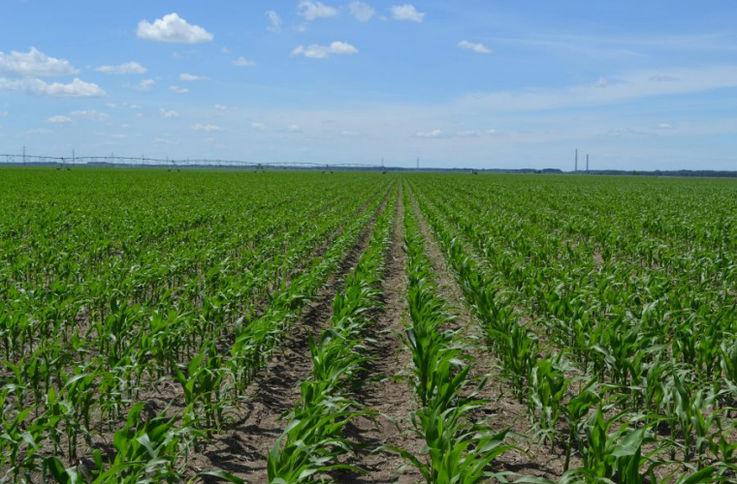 Soluții pentru fermierii afectați de secetă
