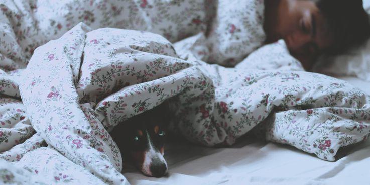 Какую роль играют фазы медленного и быстрого сна в процессе обучения