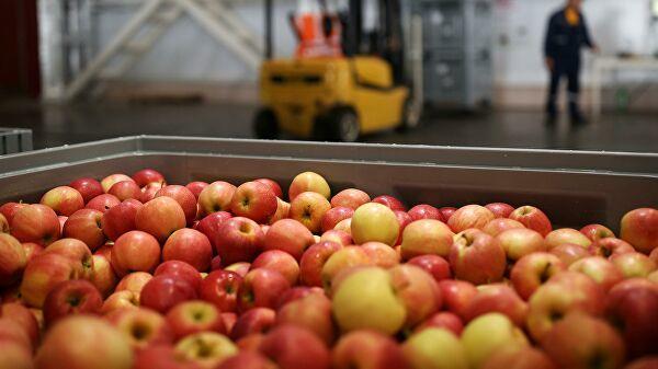 Молдавские фирмы обвиняются в контрабанде украинских яблок в Россию