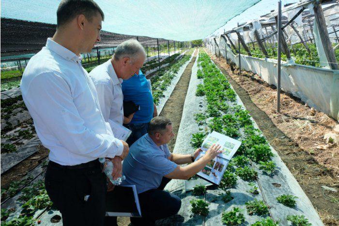В Унгенах провели семинар для выращивающих клубнику фермеров