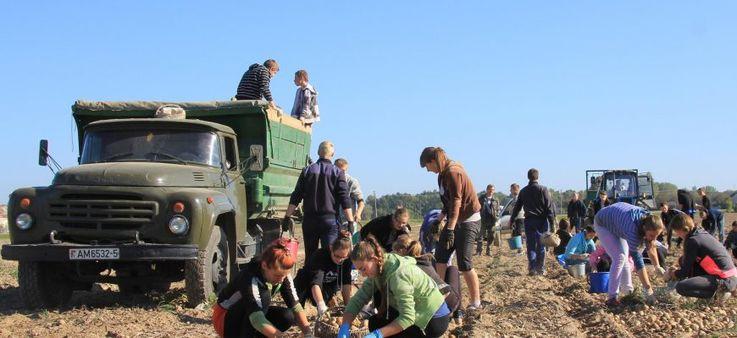 Сельхозпроизводство в Молдове сократилось в первом полугодии на 2,8%