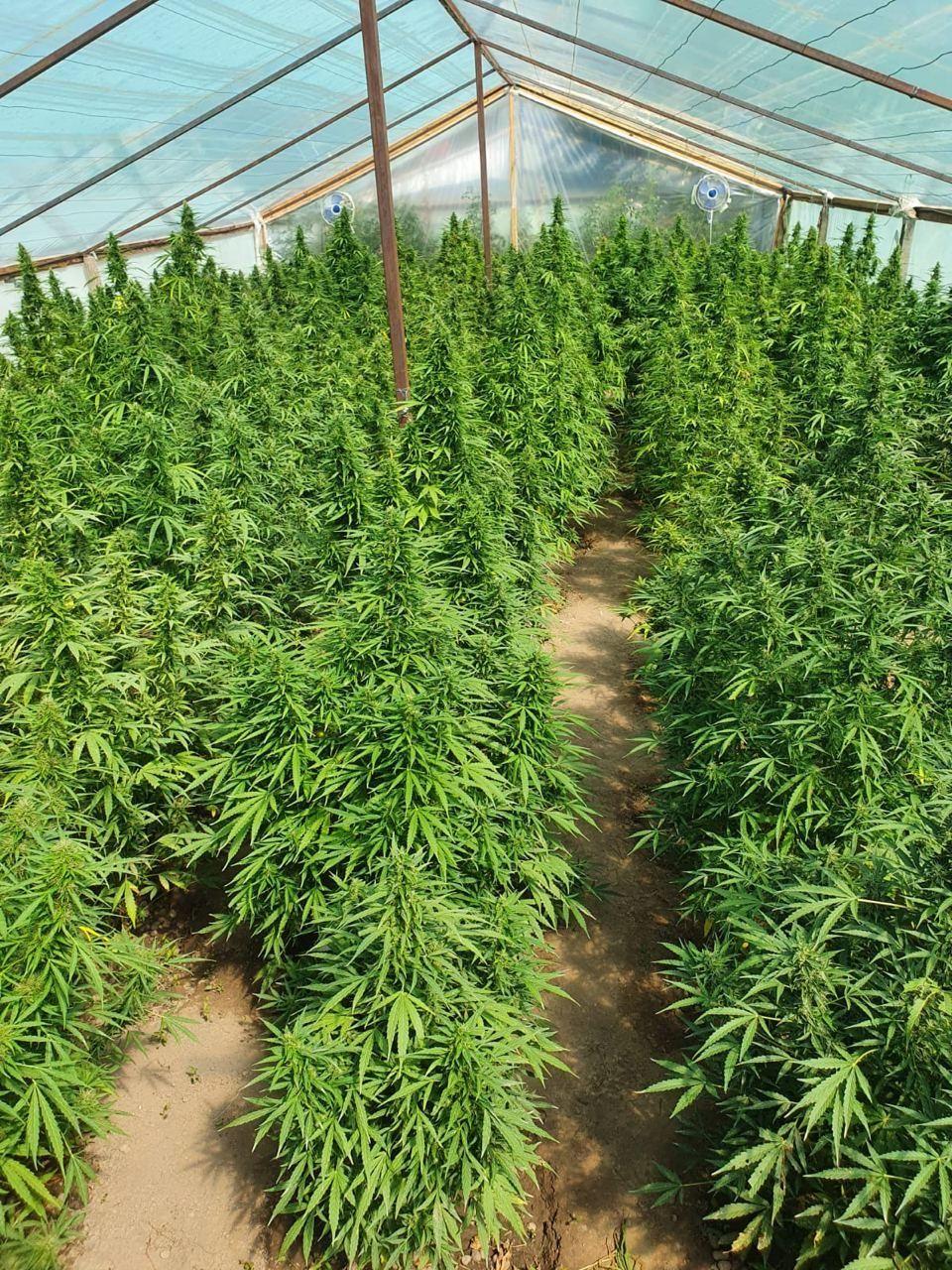 В где омск конопли купить марихуану купить где прагу в