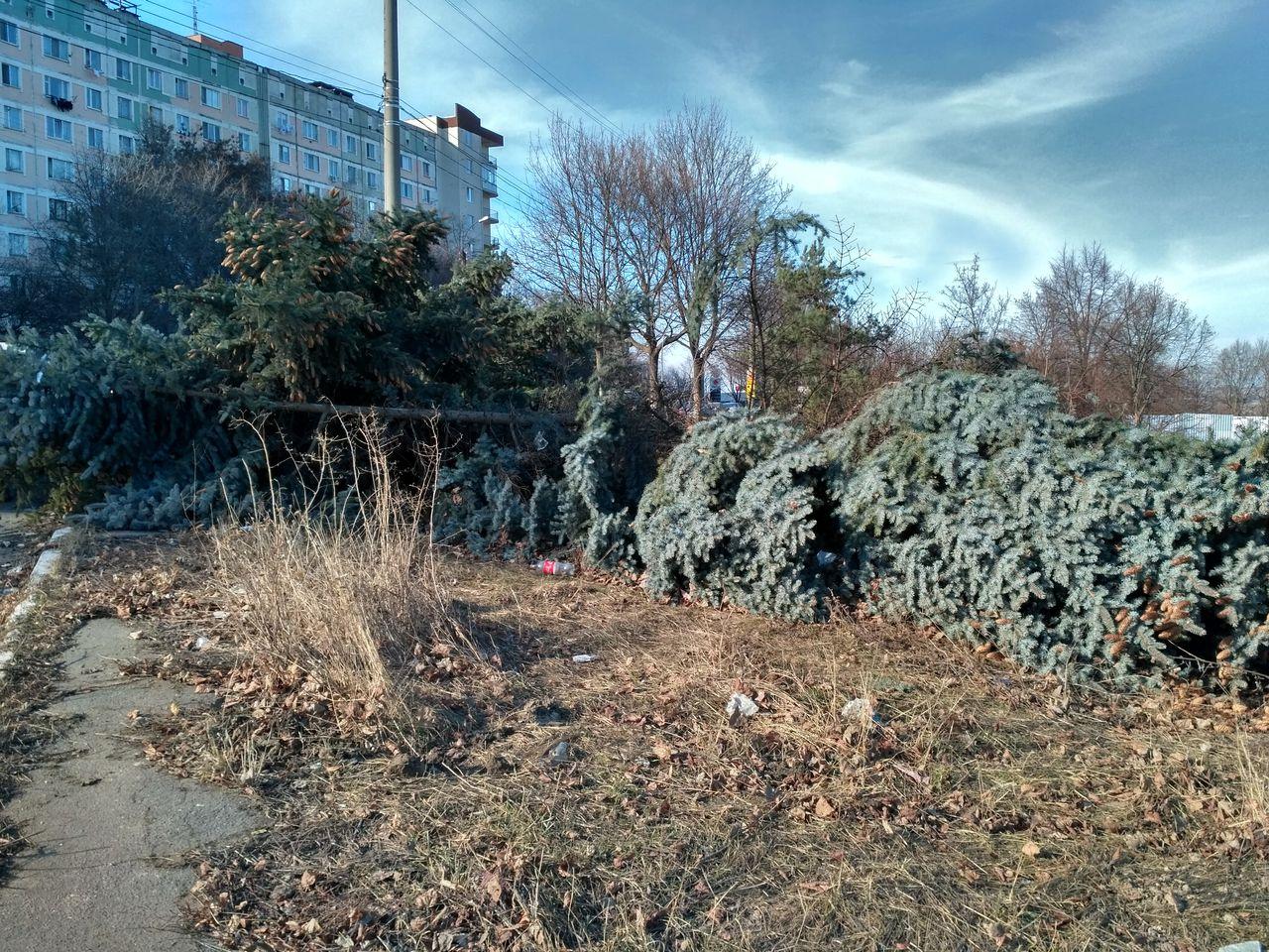 Вырубают деревья куда жаловаться в выборге