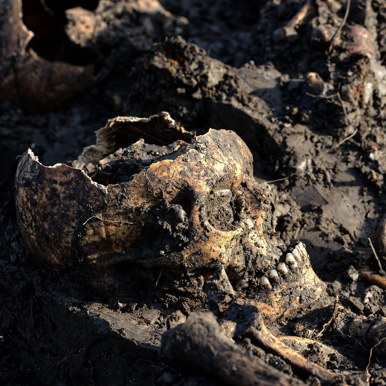 В Нидерландах археологи обнаружили загадочное захоронение