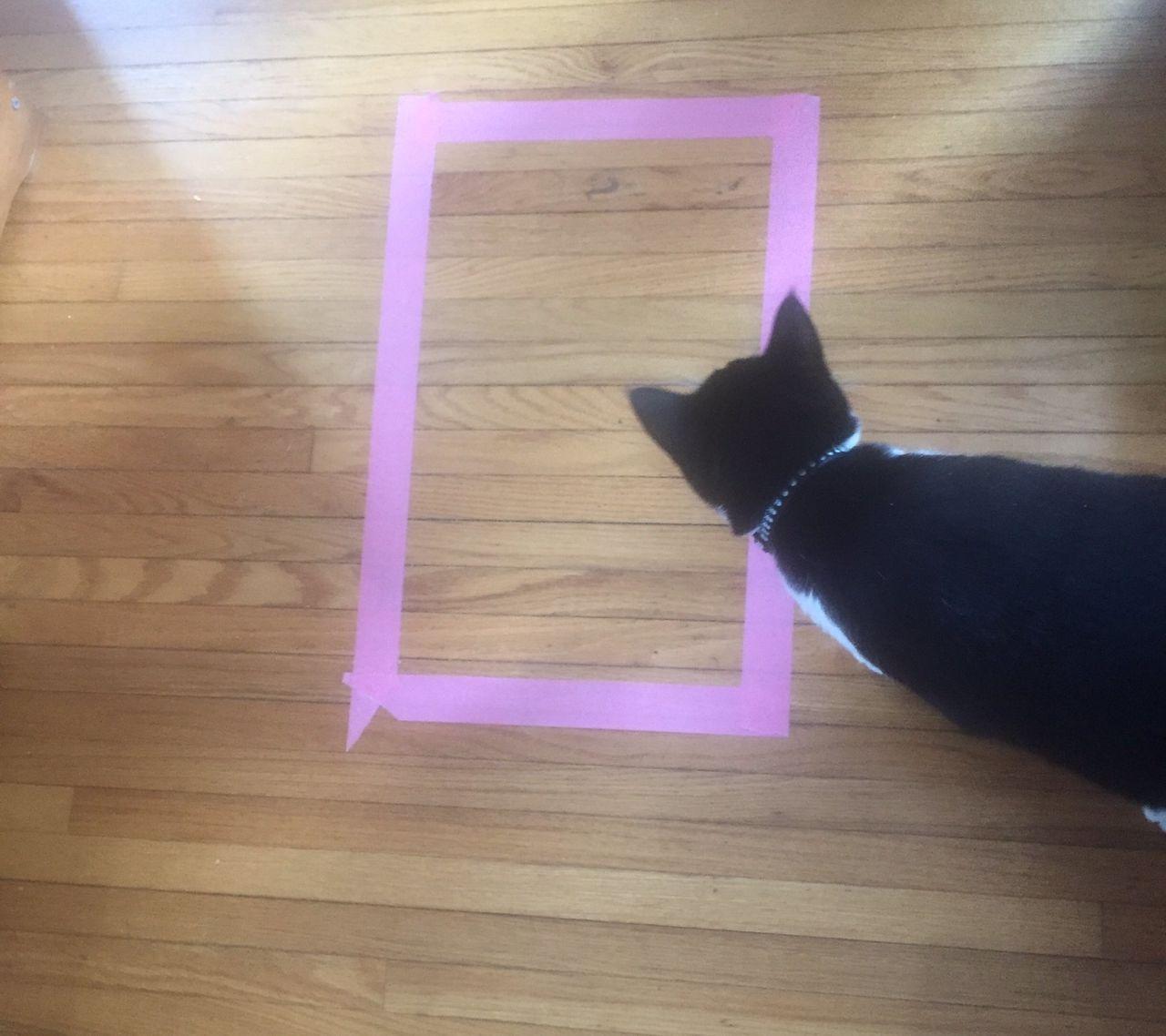Ученые выяснили, что кошки могут забираться в воображаемые коробки