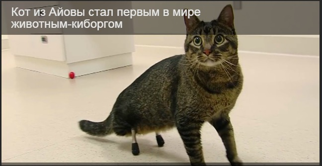 Making a catwalk for cats
