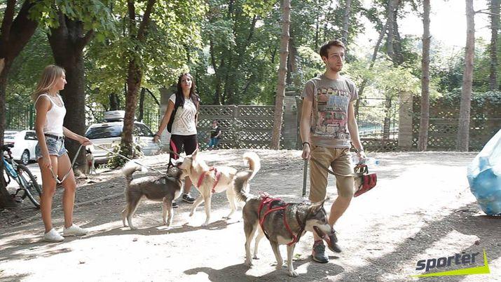 бег с собакой, draylend 2015