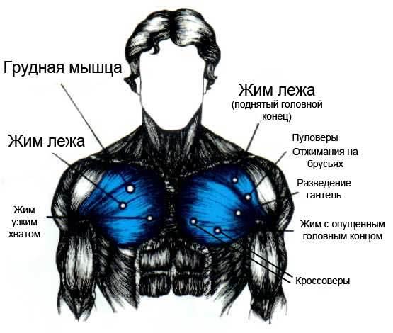 Как накачать грудные мышцы отжиманиями в домашних условиях 822