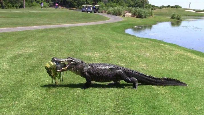 сша, гольфист