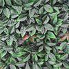 купить Декоративное покрытие Листья Розы 50сm x 50cm в Кишинёве