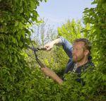 Ножницы садовые Gardena NatureCut FSC (12300-20)