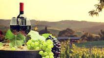 Schimb de experienţă între vinificatorii din România şi cei din Moldova