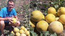 Agrobiznes: Roman Mardari, tânărul decis să producă pepene verde eco Ⓟ